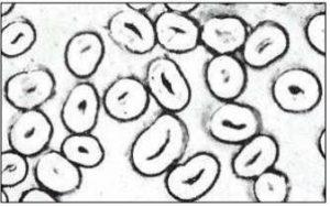 fibres de coton mercerisé